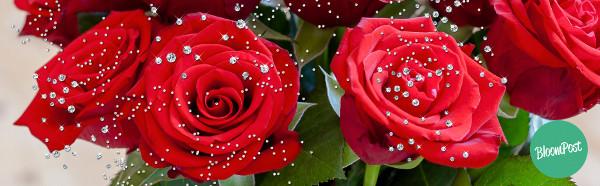 BloomPost-Diamanten_Valentinsrosen