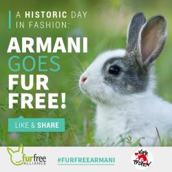 Armani-wird-pelzfrei
