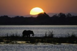Mana Pools_Ruckomechi_Sunset_Dana Allen